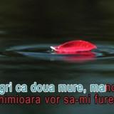 Echipament karaoke - Melodii KARAOKE romanesti, DVD original