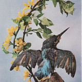 Carti Postale Romania dupa 1918 - Animale-Pasari - Vedere