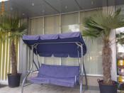VAND PALMIERI WASHINGTONIA 2 -2.5 m , 10 buc , PRET 500 EUR / buc foto