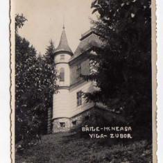 BAILE MONEASA -Vila Zubor