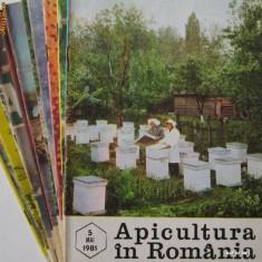 APICULTURA IN ROMANIA, colectie completa pe anul 1981 (stuparit, albinelor, stuparului, albinarit) 8 lei/revista