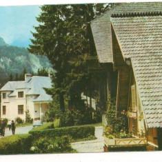 Carte postala-SINAIA-Vile pe Cumpatu - Carte Postala Muntenia dupa 1918