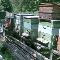 Stupi pentru albine - Apicultura