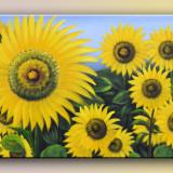 Tablou ulei pe panza - Floarea soarelui (90x60cm) IEFTIN SI FRUMOS