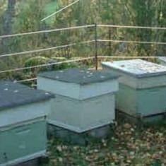Stupii albine - Apicultura
