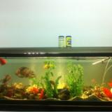 Vand acvariu 486 litri plus 16 pesti diferite specii