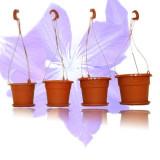 Ghiveci cu agatatoare GH5 - ghivece flori