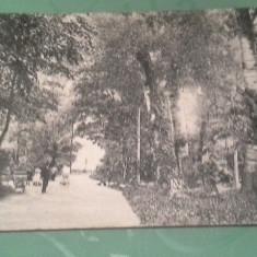 ANII1900 VINGA PARC CIRCULATA - Carte Postala Crisana 1904-1918