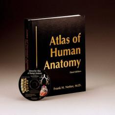 Atlas Anatomie Umana NETTER third edition