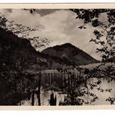 LACUL ROSU =GYILKOSTO - Carte Postala Transilvania dupa 1918, Necirculata, Fotografie