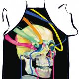 TOY130 Sort tematic cu model anatomic craniu