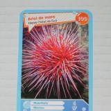 CARTONASE MEGA IMAGE - COMORILE OCEANELOR NR 100 - Cartonas de colectie