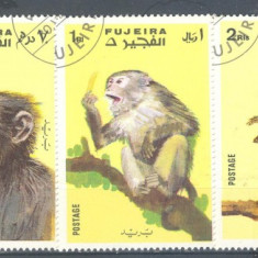 Timbre straine, An: 1972, Natura, Stampilat - Fujeira Maimute serie stampilata 1972