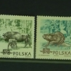 POLONIA 1954 – ANIMALE SALBATICE, serie DT nestampilata N42 - Timbre straine
