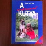 A varosi kutya caini de oras carte hobby limba maghiara graf zoltan ilustrata