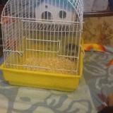 7 hamsteri Pitici rusești fuarte drăguți care nu musca si iubesc copiii
