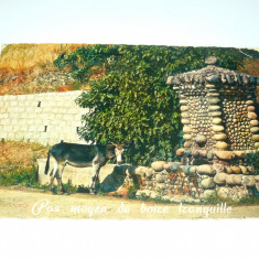 Pitoresc - Corsica - magar - animale - Franta - 1970 - 2+1 gratis - RBK9980, Circulata, Fotografie