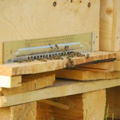 Familii de albine/roiuri de albine (cu sau fara lada) - Apicultura