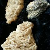 Fosila roca - Flori de mina